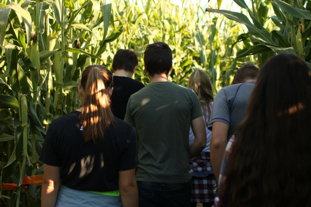 Exploring the Corn Maze