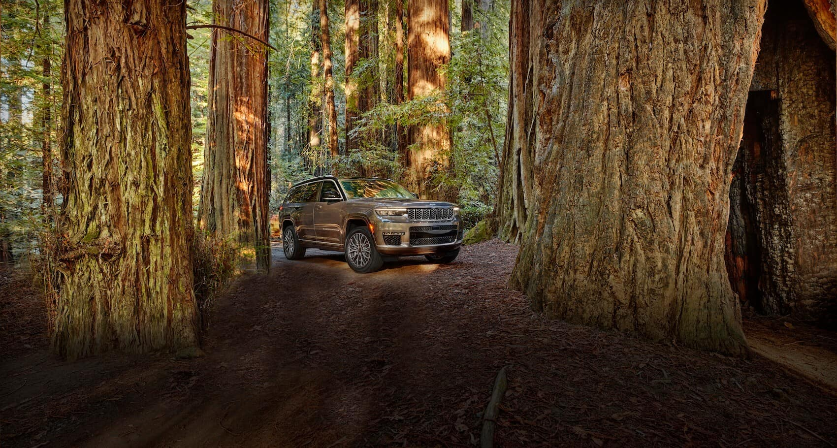 Jeep Grand Cherokee In Forrest